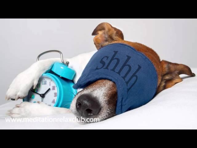 Dog Relaxation Music | Calming Music for Dogs and Cats (Pet Therapy)