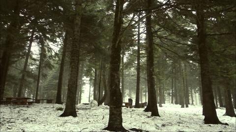 Doğa Sesleri - Gölcük Sound Of Silence
