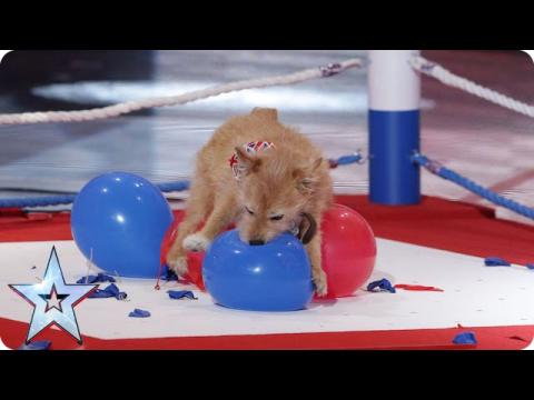 Mitch & Cally The Wonderdog have a pop at the world record | Britain's Got Talent 2015