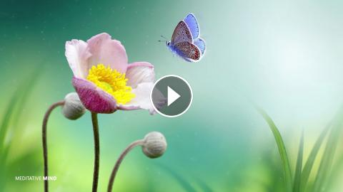 Beautiful Morning Meditation Music Indian Flute Music Positive Energy Music Yoga Music