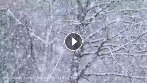 Relaxing Sound of Falling Snow* White Noise Nature Sounds